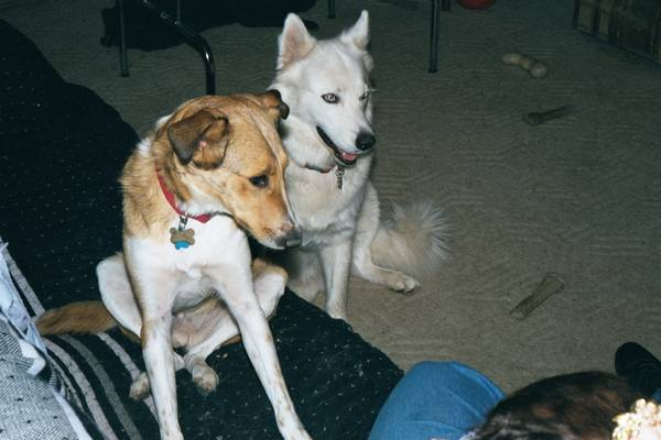 Sadie and Nakota